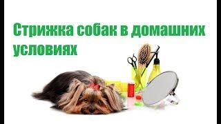 Стрижка Собак В Домашних Условиях & Как Подстричь Собаку. Ветклиника Био-Вет