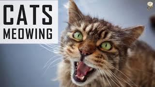7 اشياء تفعلها تجعل قطتك تكرهك