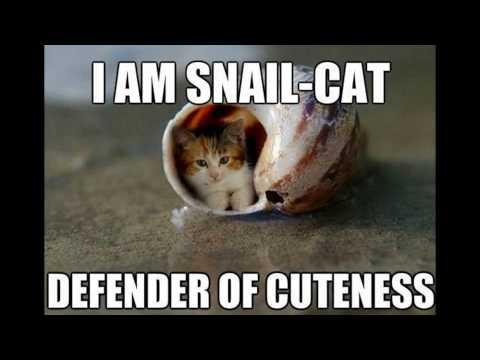 Cute Cat Memes!!!!!!!!!!!!!