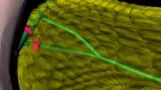 foie et vesicule biliaire anatomie physiologie science