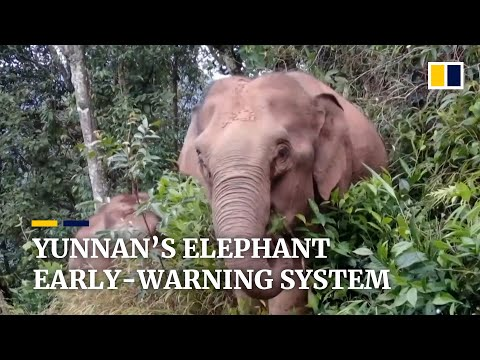China launches early-warning system in Yunnan to prevent human-elephant conflict