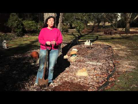 How to Keep Cats Out of Garden Beds : Gardening Tips & Advice