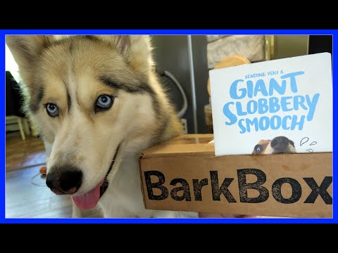 SHELBY WANTS THE CARROT | BarkBox UnBoxing with the Snow Dogs