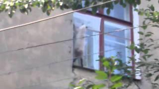 кот висит на окне
