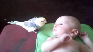 Просто Чудо!!! Попугай ПОЁТ для малыша