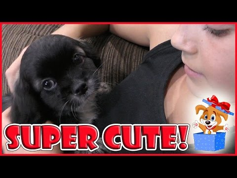 DID WE GET ANOTHER PUPPY? | We Are The Davises