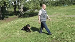 Ротвейлер - лучший в мире пес