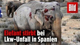 Lkw mit Elefanten kippt auf der Autobahn um – ein Tier stirbt