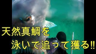 先日、新潟県に遠征した際の映像です。なんだかんだで初真鯛。この日の...