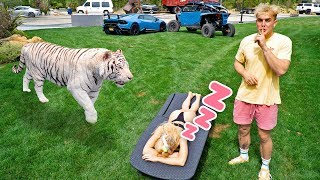HOT GIRLFRIEND WAKES UP BY TIGER PRANK!