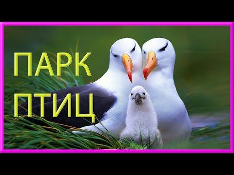познакомимся с птицами