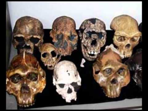 Evolution Lies: Myth One: Hominids