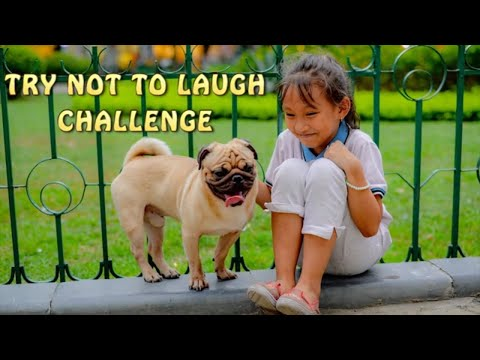 The Funniest & Cutest Dogs And Kids  TRY NOT TO LAUGH CHALLENGE 2020!