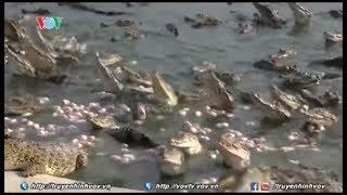 Độc đáo những món ăn từ thịt cá sấu ở Thái Lan   VOVTV