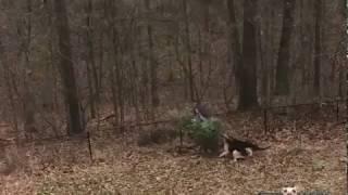 Собаки не дают хозяину выкинуть елку.