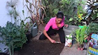 How to Grow Corn & Keep Worms Out Naturally : The Chef's Garden