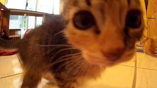 34 Minutes of Cute Kittens Playing in the Morning - Candid Action Camera Video