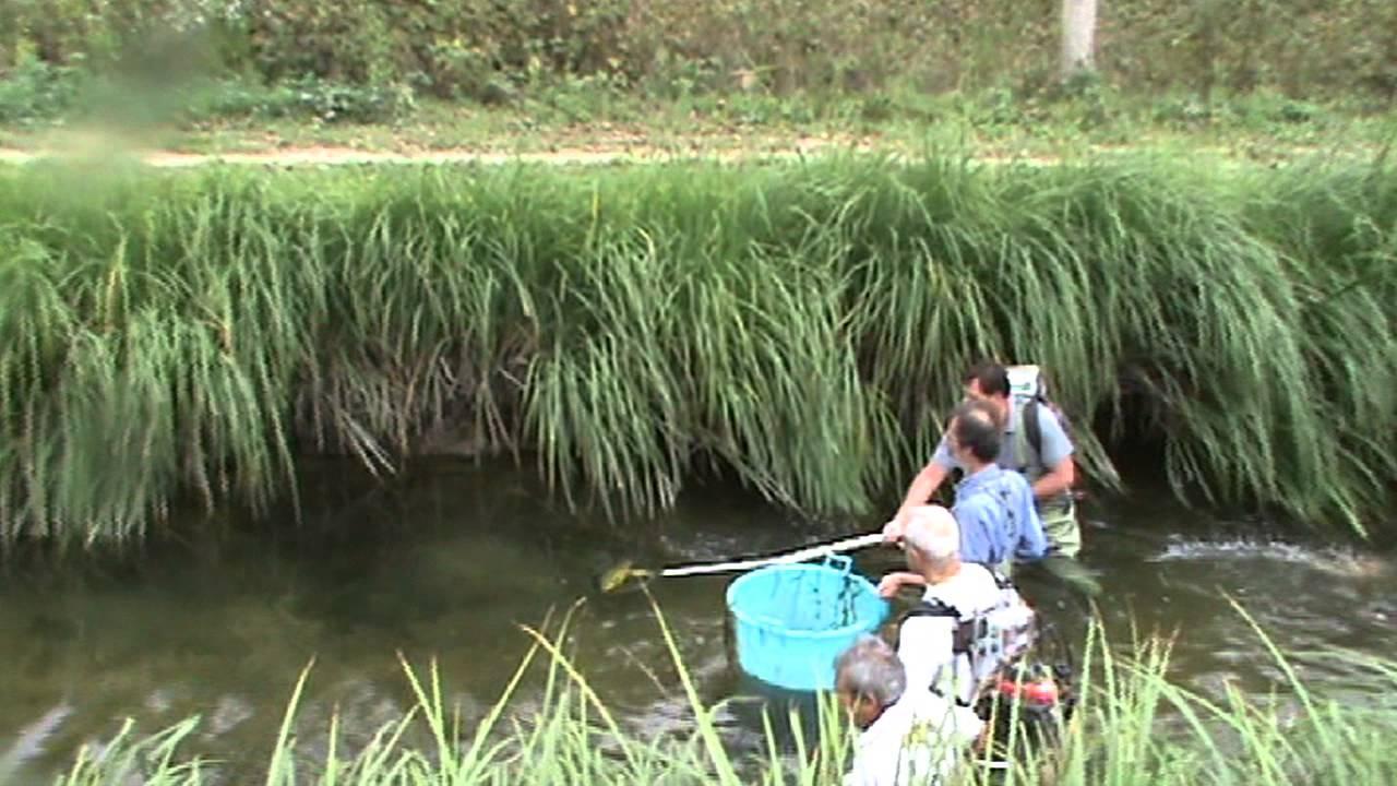 Asciutte dei navigli dove finiscono i pesci viyoutube for Dove comprare pesci rossi