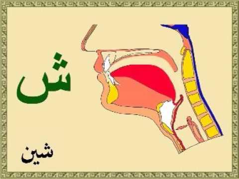 Arabça Harfler Harflerin Boğazdan çıkış yerleri Mahreçler