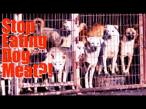 Yulin Dog Meat Festival -- And 10 Other Things You May Not Know About Eating Dogs