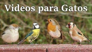 Videos para Gatos : El jardin de las aves