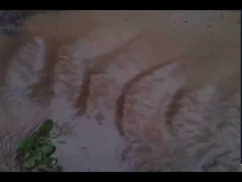 liquid simulation )Bvdub - Silver Altars Run To Rivers(