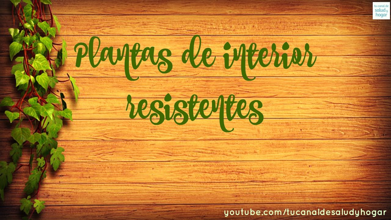 Plantas de interior resistentes youtube for Plantas de interior resistentes