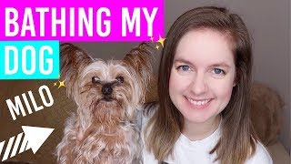 GIVING MY DOG A BATH!