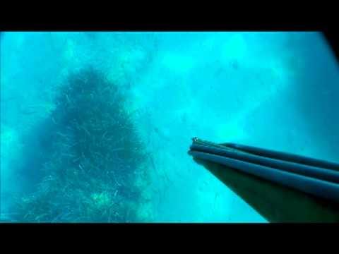 hqdefault - Rousseau, carpe de mer, Gros Yeux