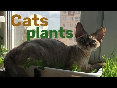 Cats and plants | My life with Devon Rex