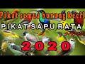 Pikat Ampuh Untuk Semua Burung Kecil Kombinasi Burcil Ribut Ampuh Caling Bird  Mp3 - Mp4 Download