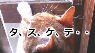不自由な猫さんを嘲笑うヤツ!【侵入した野良仔猫】~家猫修行中~ thumbnail