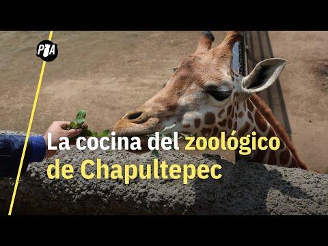 ¿Qué comen los animales del Zoológico de Chapultepec?