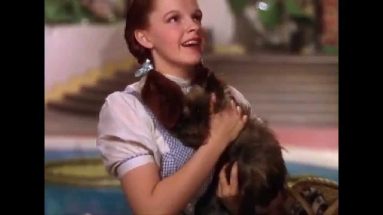 Toto Ive Feeling Were Not In >> Toto I Have A Feeling We Re Not In Kansas Anymore Wizard Of Oz