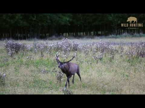 Red Stag Fever   Wild Hunting Romania    Part 1