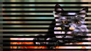 Чёрные кошки (8 часть )