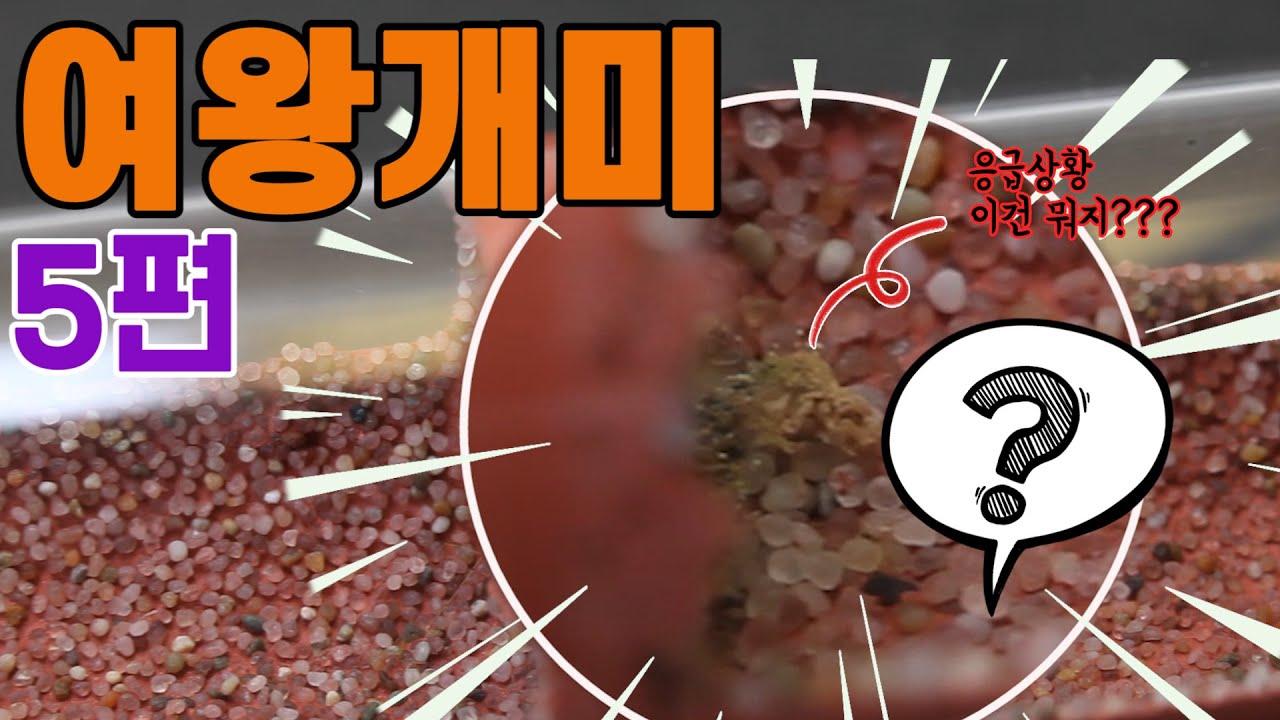 개미왕국 사육일기 5편 [ 죽음의 곰팡이 ]