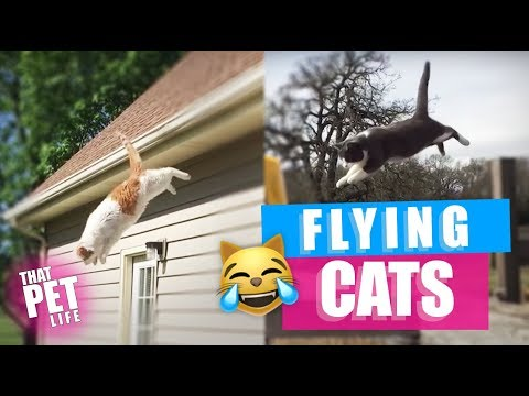Invasion of the Flying Cats