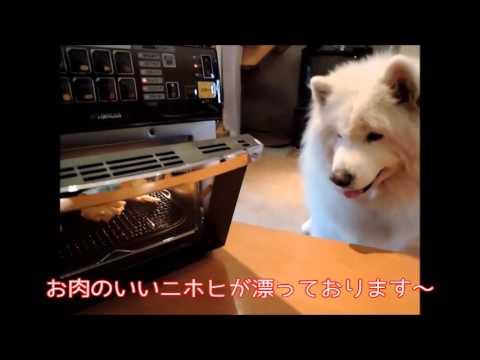 #16 今リクックの風が熱い!リクック熱風オーブン | サモエド クローカのモフモフ日記 | 犬といっしょ | アイリスペットどっとコム