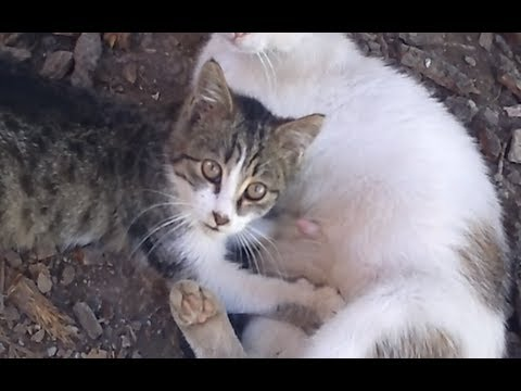 Kitty squeezes mothers stomach
