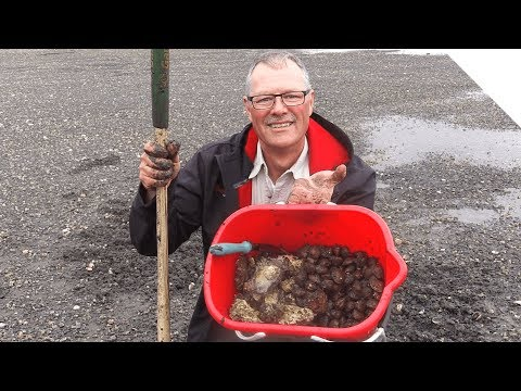 Clamming Tips And Oysters
