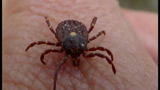 Big Move! Congress Orders Pentagon to Provide Info On Weaponizing Ticks