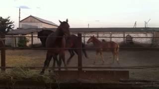 """""""Любовь и лошади"""""""