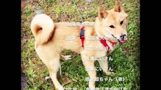 こんにちは! 「山陰柴犬」は、日本の山陰地方で育まれた地犬です。 わ...