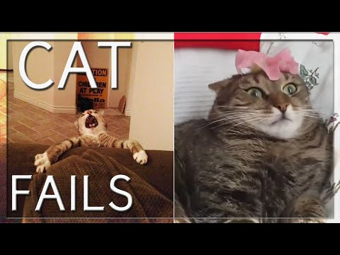 BEST CAT FAILS EVER (COMPILATION) 🐱