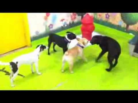 playtime at doggie daycare my pet garden pasadena ca - My Pet Garden