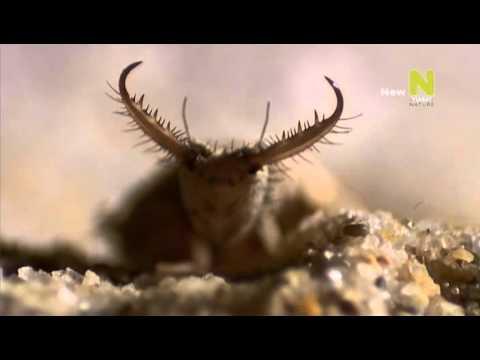 Мир насекомых видео 4 фотография