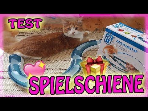 LOKI testet ❤️ Cat it Spielschiene 🐱
