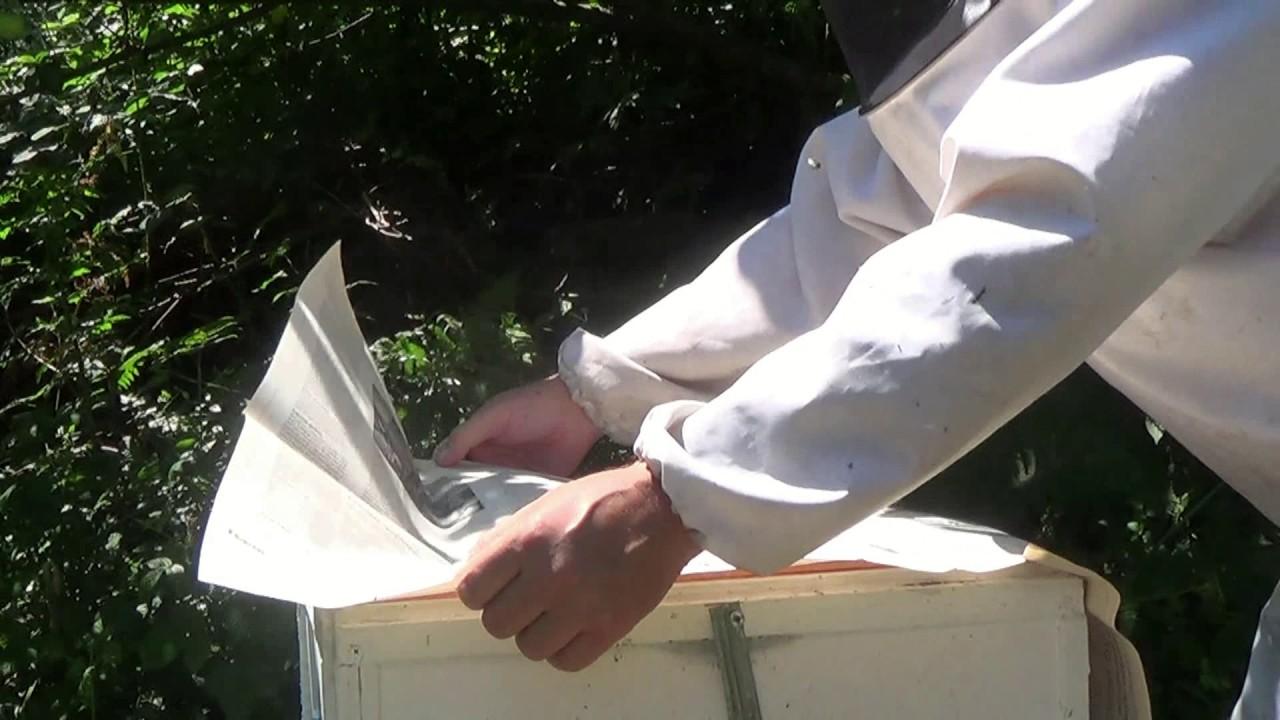 Проверить штрафы по птс ираспечатать