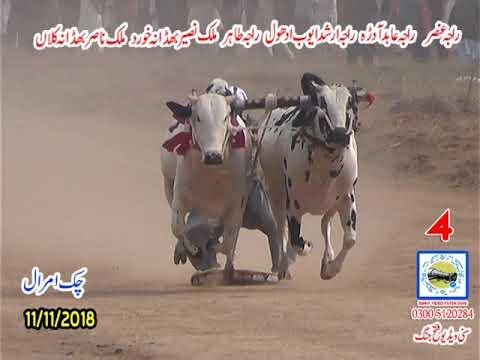 Bul Race In Pakistan Sunny Video Fateh Jang 11 11 2018 NO4